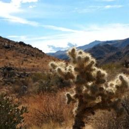 Desertscape, Jumping Cholla