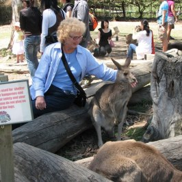 The Lone Pine Koala park has many kangaroos.