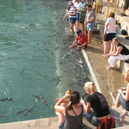 Darwin tourists gather for the evening fish feeding.