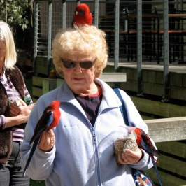 Marie with Crimsom Rosellas.