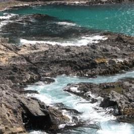 New Zealand shoreline where many birds roost.