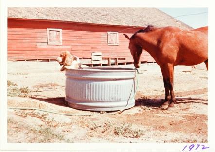 horse dog 1972